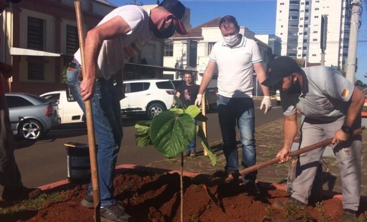 Mais de 100 mudas de árvores estão sendo plantadas em Getúlio Vargas